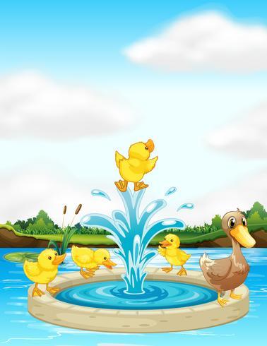 Une famille de canards à la fontaine