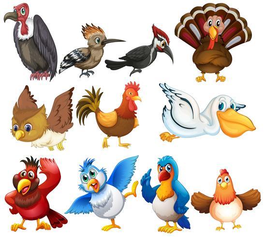 Colecciones de aves vector