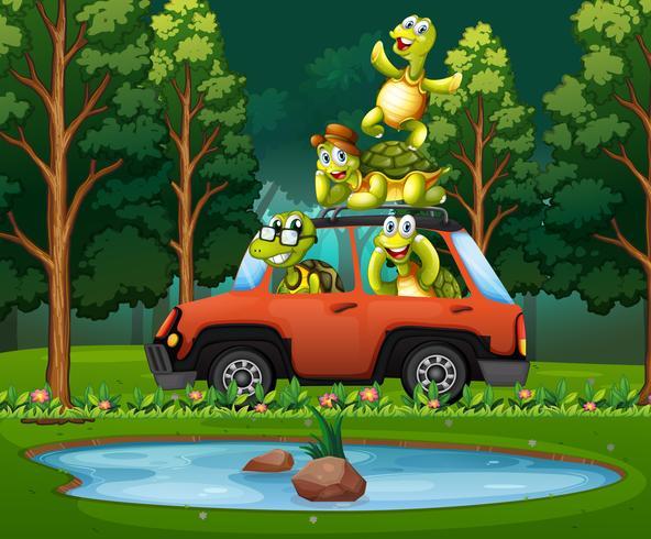 Viaggio della tartaruga in natura