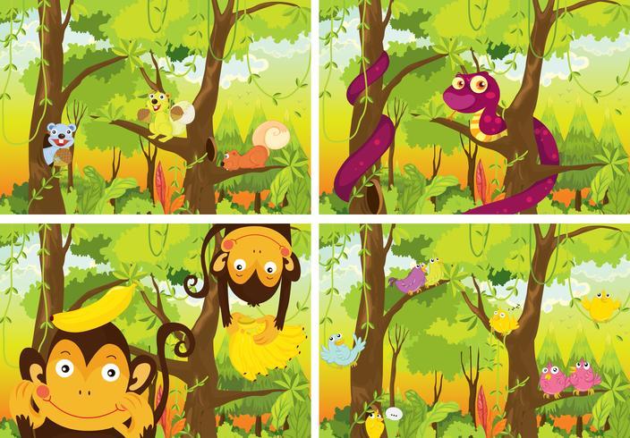 Selva y animales vector