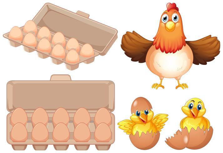Set di uova fresche e pollo