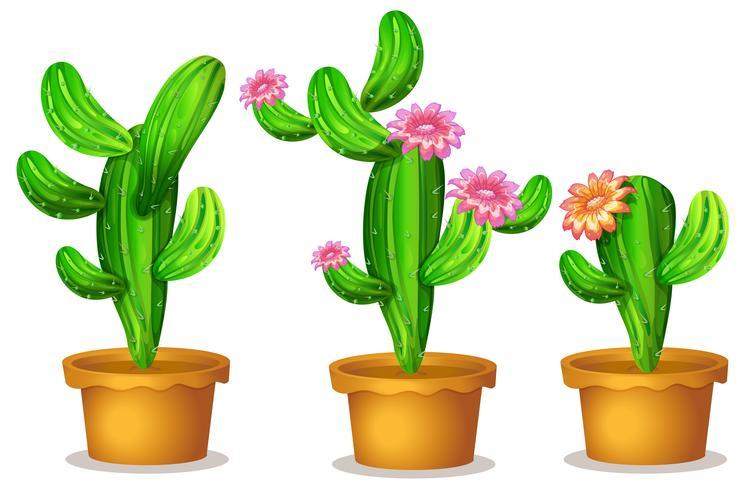 Cactus en la maceta vector