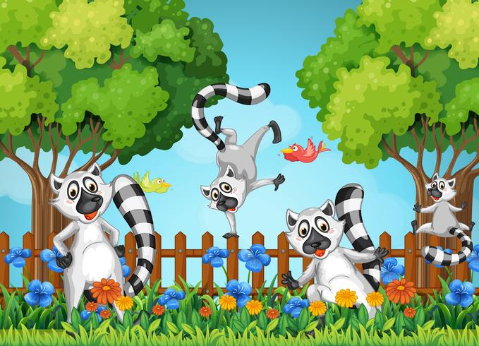 Fyra lemurer leker i trädgården