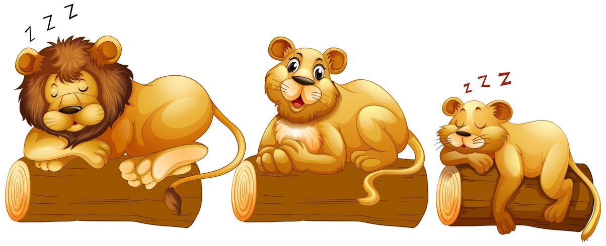 Família de Leão no log
