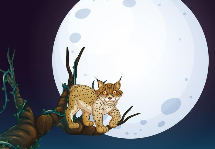 Een wilde kat op donkere nacht