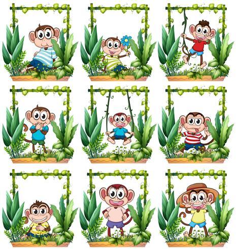 Macacos na moldura de madeira