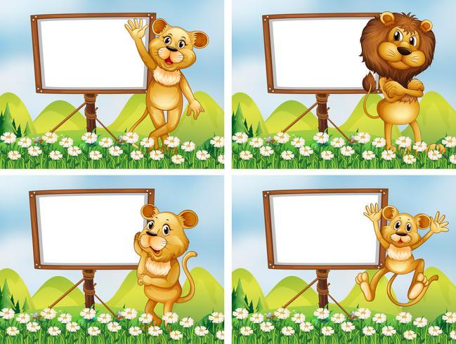 Leões com placas de madeira