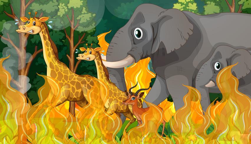 Wild animal run away from wildfire