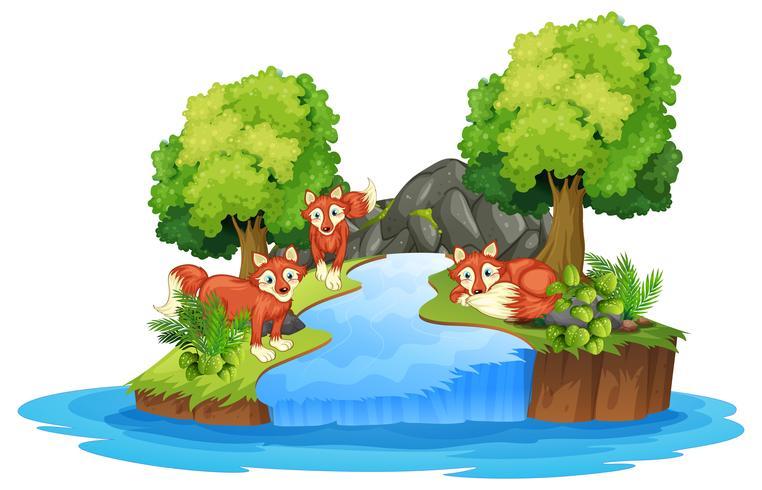 Isolierter Fuchs in der Insel