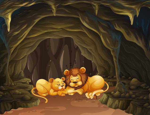 Dos leones durmiendo en la cueva. vector