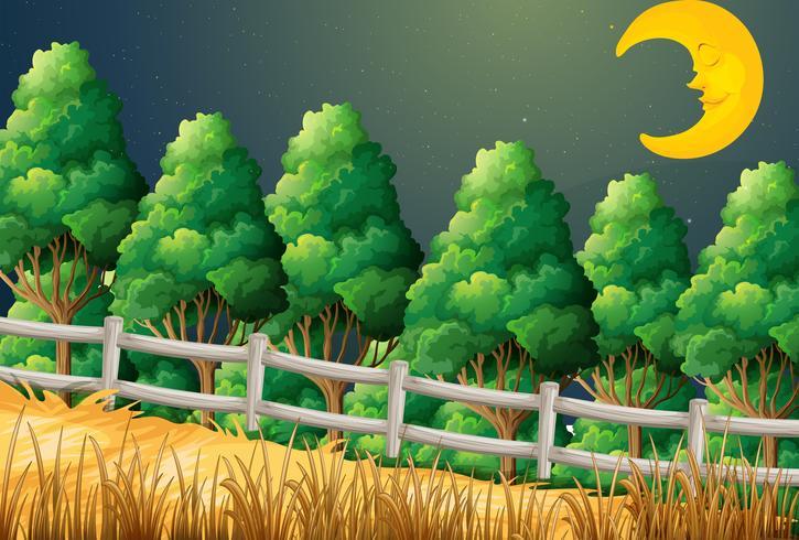 Uma floresta com uma lua adormecida