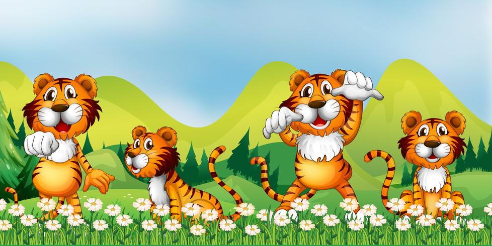 Vier Tiger im Blumenfeld