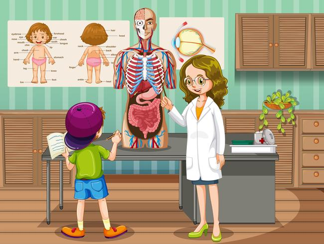 Doctor showing organs to kid