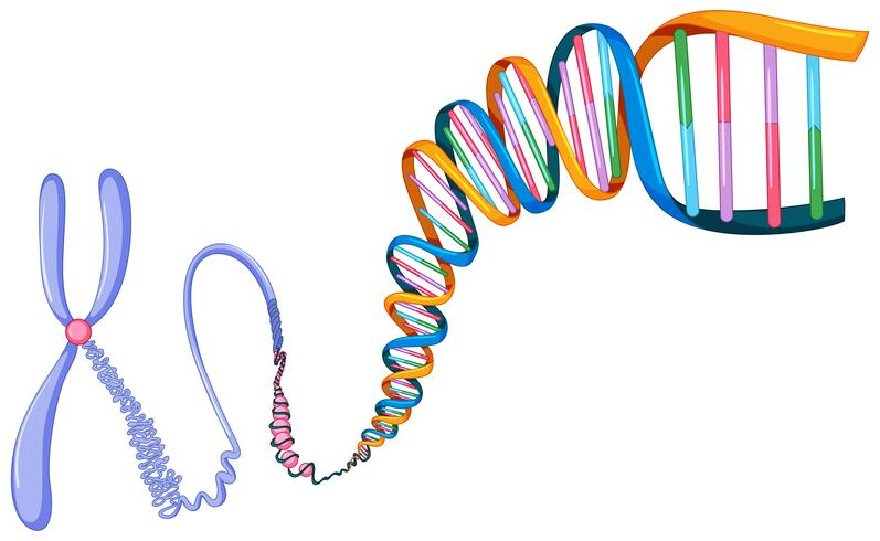 DNA symbol on white background vector