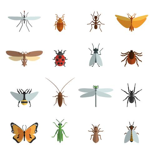 insect pictogram plat vector
