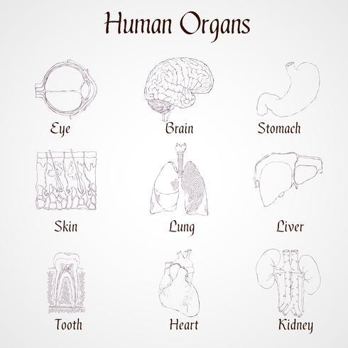 Icônes d'organes humains vecteur