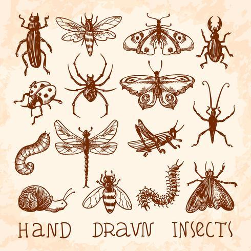 Set di schizzo di insetti vettore