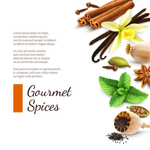 Spices on white background vector