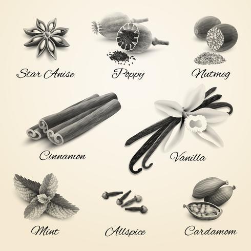 Conjunto de especias blanco y negro
