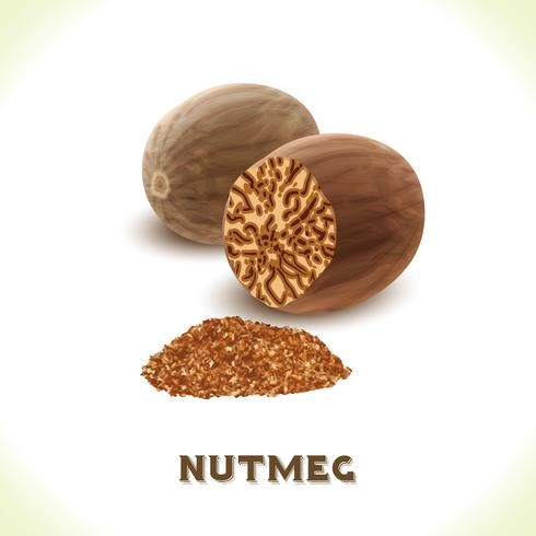 Nutmeg nut isolated on white vector