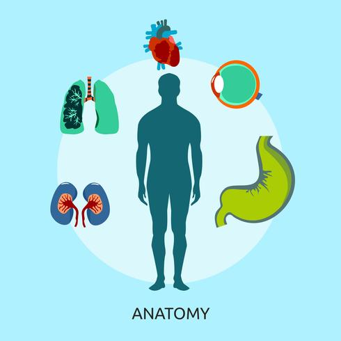 Anatomy Conceptual illustration Design