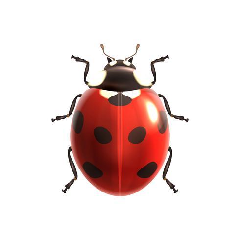 Ladybug realistic isolated vector