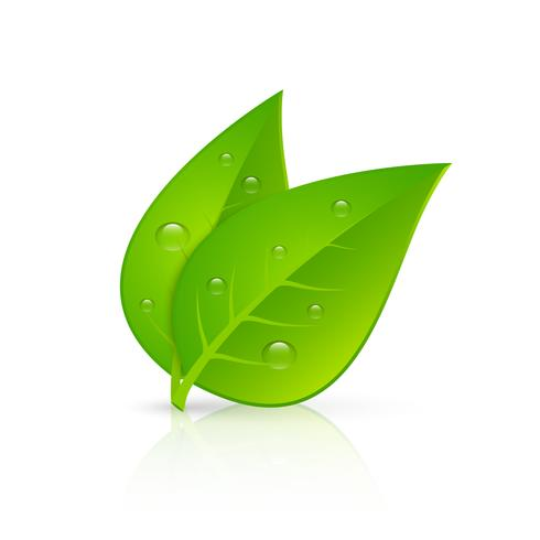 Green leaves realistic image print vector
