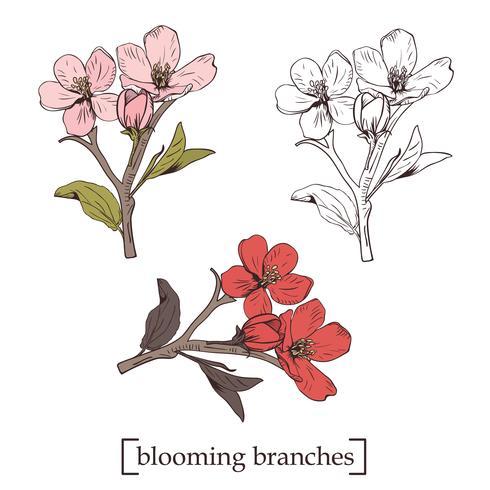 Blommande träd. Ange samling. Handdragen botaniska blommar grenar på vit bakgrund. Vektor illustration