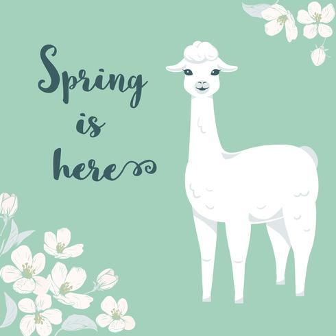 Gullig tecknad llama karaktär med körsbärsträd blommor och text Våren är här.