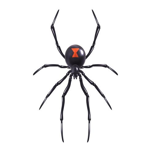 Realistic spider isolated vector