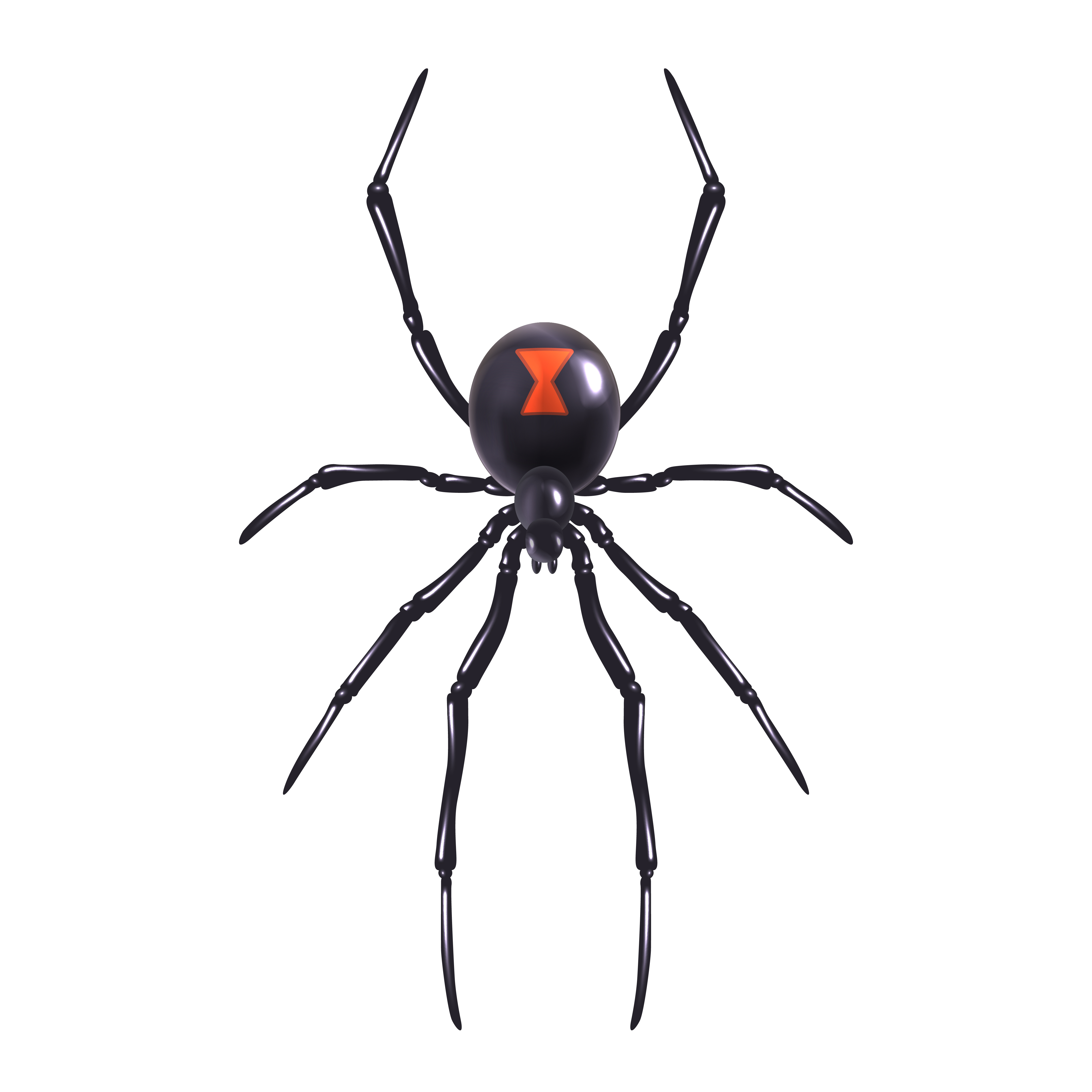 Realistic spider isolated - Download Free Vectors, Clipart ...