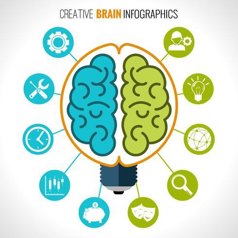 Infografía creativa del cerebro. vector