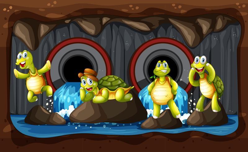 Een groep Turtle Underground