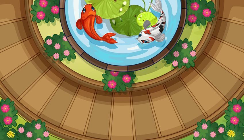 Vista superior de peces koi nadando en un estanque