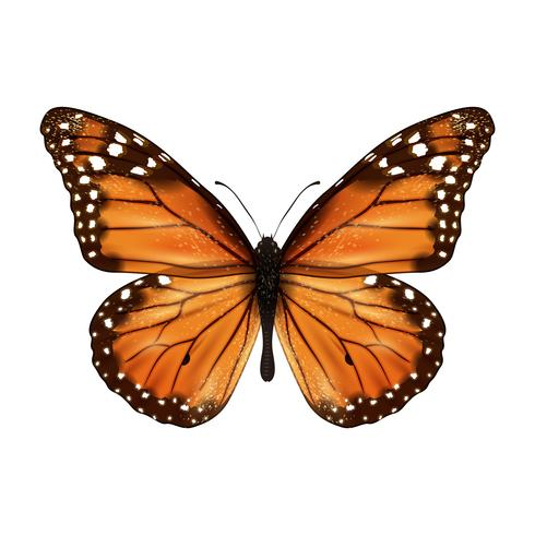 Butterfly realistic isolated vector