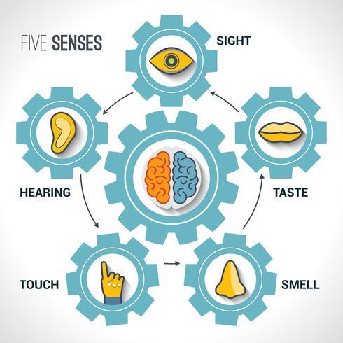 Concepto de cinco sentidos