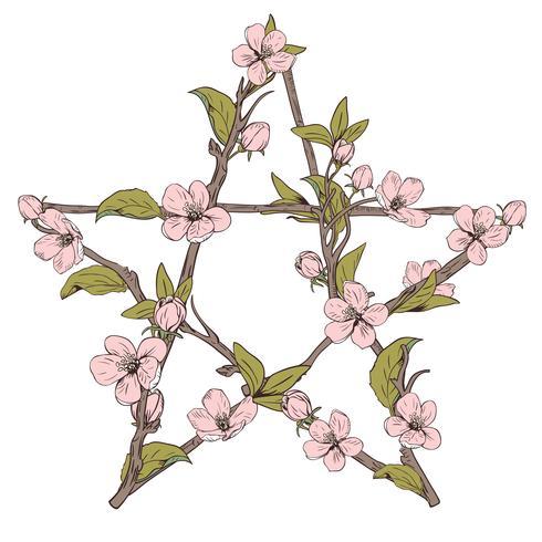 Pentagram signo hecho con ramas de un árbol en flor. Dé el flor rosado botánico exhausto en el fondo blanco.
