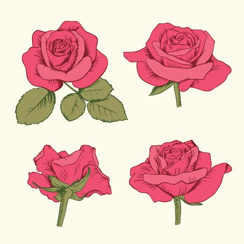 Set collection of red roses with leaves isolated on white background. Vector illustration