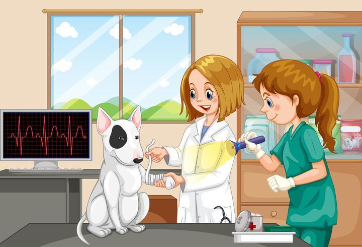 Médico veterinário e enfermeira ajudando um cão