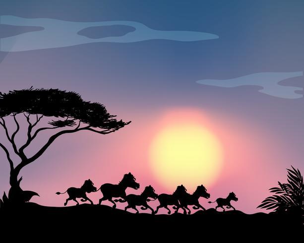 Schattenbildpferde, die in das Feld laufen