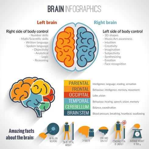 Conjunto de inforgaphics del cerebro vector