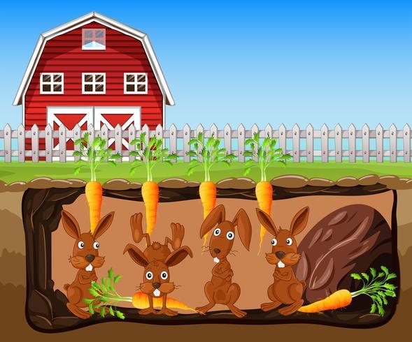 Um buraco de coelho sob a fazenda de cenoura
