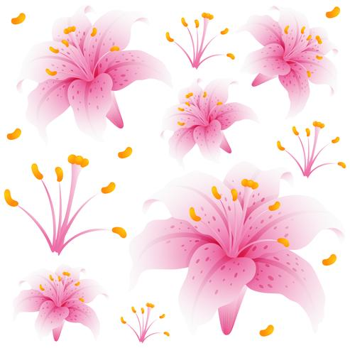 Seamless background design with pink lily flowers vector
