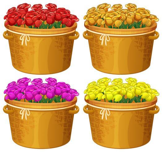 Fyra korgar av rosor i olika färger