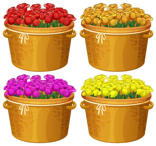 Quattro cestini di rose in diversi colori