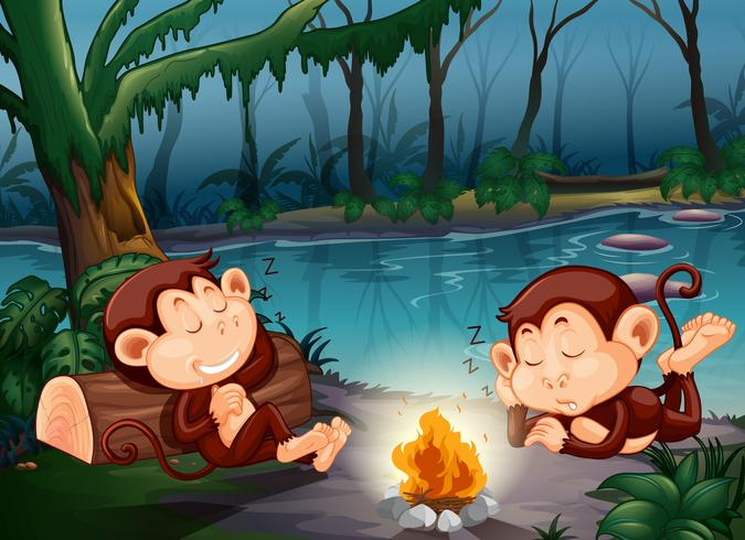 Mono durmiendo en el bosque