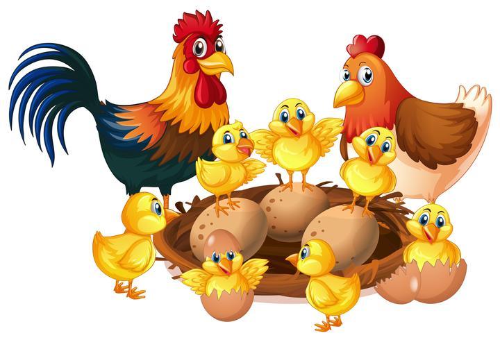 Kippenfamilie op witte achtergrond