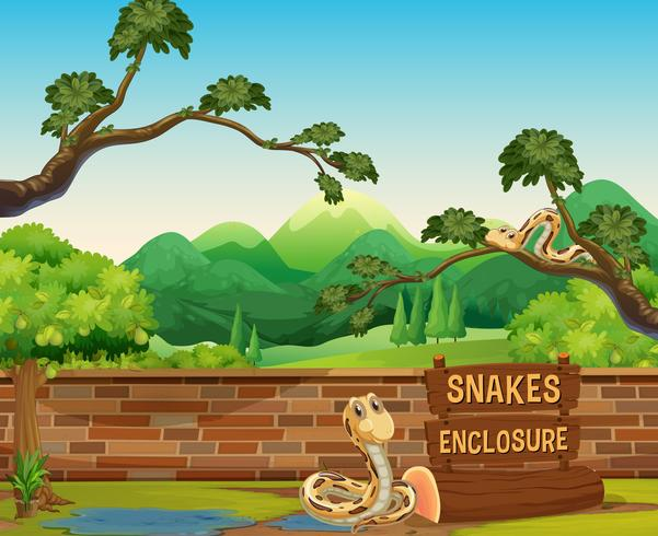 Zoo scene with snakes at day time