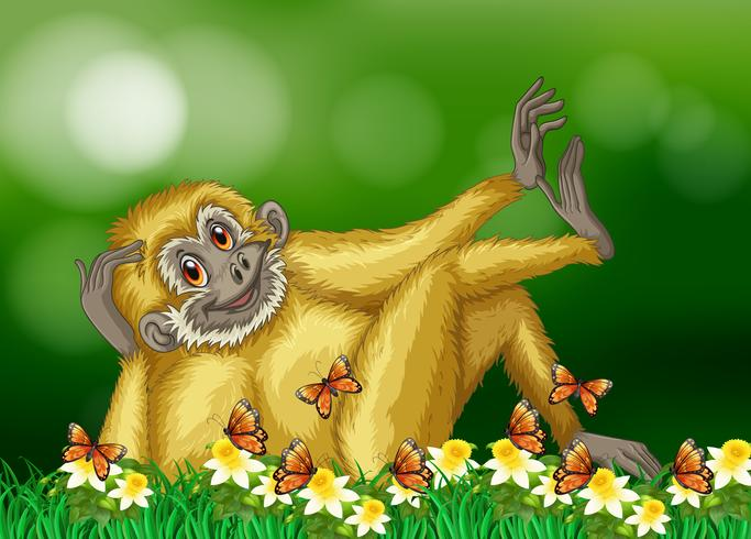 Gibbon with white fur in forest vector