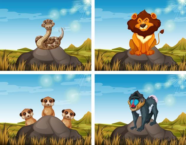 Wild animals in the savanna field vector
